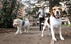 Más de 24.000 firmas contra la ley de Protección Animal