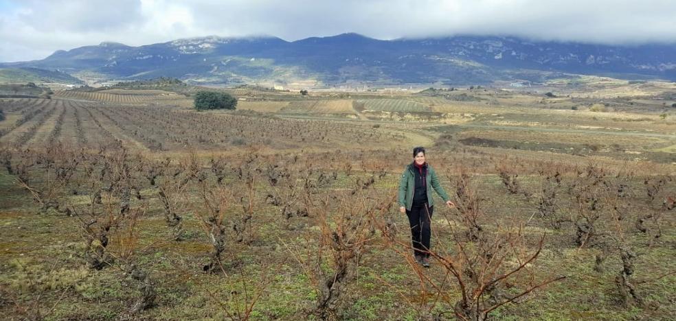 Vinos de altura, en Toloño o Cantabria