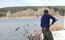 El embalse de La Grajera se repuebla con cerca de 500 kilos de truchas