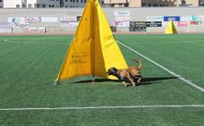 La élite canina se presenta en Haro