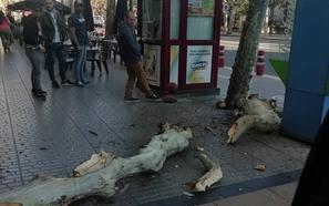 Unas ramas de gran tamaño caen sobre el quiosco de Muro de Cervantes