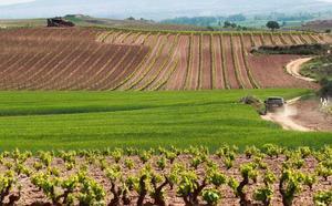 Nagore: «El que tiene miedo a plantar viñedo es porque sabe que no cumplía para recibirlo»