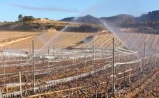 Las heladas empiezan a causar daños en los viñedos riojanos