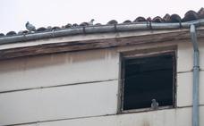 Vecinos de Santo Domingo denuncian insalubridad por una plaga de palomas