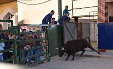 Comida, fútbol, vacas, música y bingo en las fiestas de la juventud