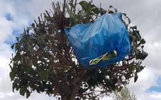 La Guindilla: Un árbol al que le crece basura