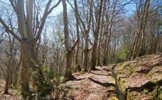 Rutas en BTT: La Regadera de Sorzano, agua y bosques de Moncalvillo