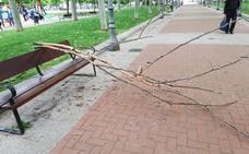 Ramas caídas en el parque de la Cometa