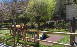 Vacas y ortigas en el parque infantil