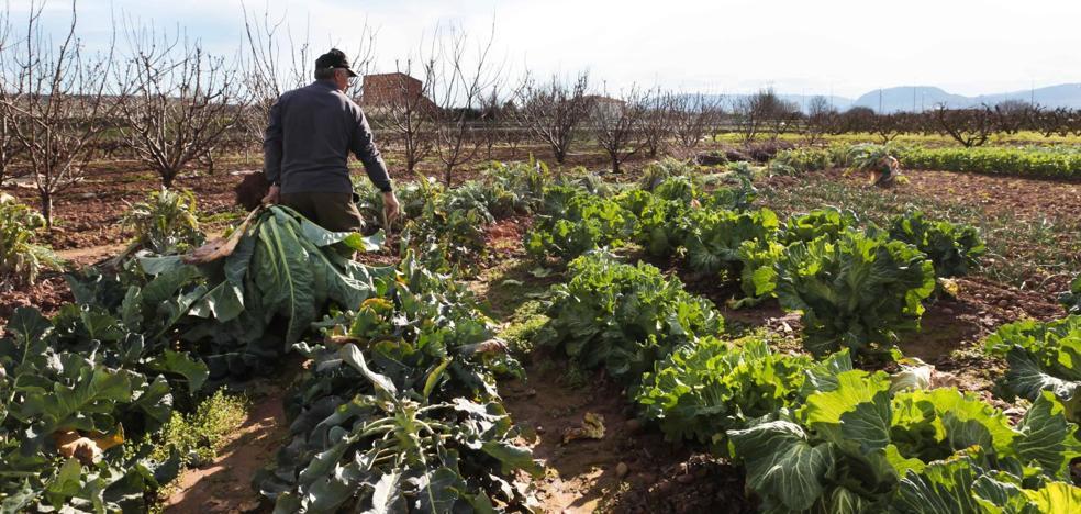 Cultivos riojanos en peligro de extinción