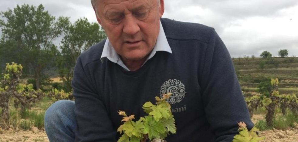 Agroseguro planea subir las pólizas de uva desde el 9% en La Rioja Media al 25% en Rioja Alavesa
