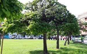 La Guindilla: árboles en mal estado en la plaza San Pío X