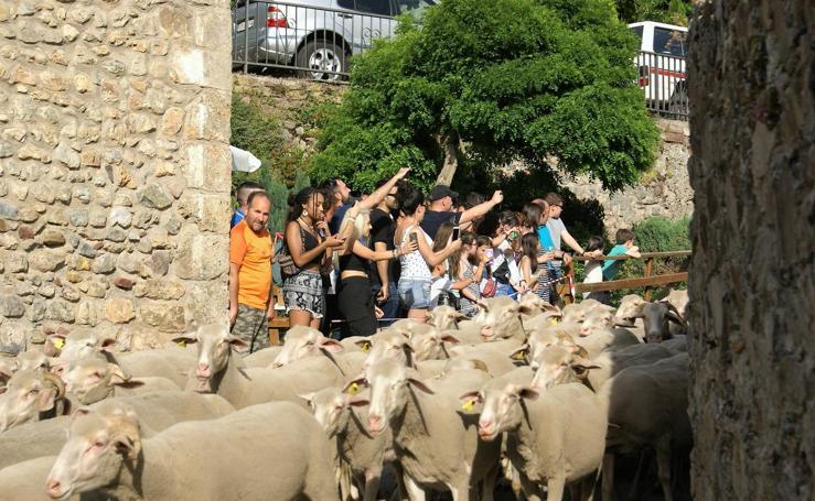 Brieva celebra la Fiesta de la Trashumancia