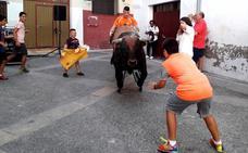 El Club Taurino de Calahorra celebró San Fermín con un encierro simulado