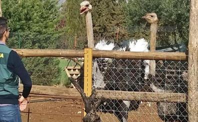 Descubierto un zoológico ilegal en Extremadura con más de un centenar de animales
