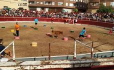 Fiestas en Entrena