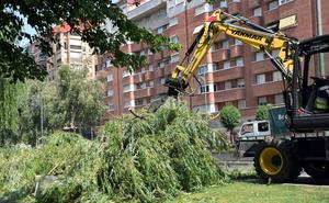 El PP reclama información sobre la tala de árboles en Vara de Rey y La Grajera