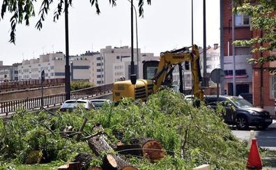 Zúñiga asegura que la tala de árboles en Logroño «viene del anterior equipo de Gobierno»
