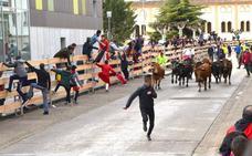 El PP de Calahorra asegura que «las vacas no se pagan por metros»