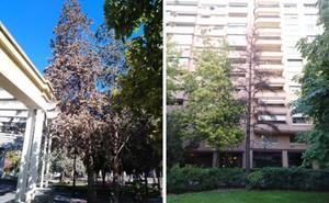 El Ayuntamiento retirará dos árboles muertos en el parque del Carmen y en El Espolón