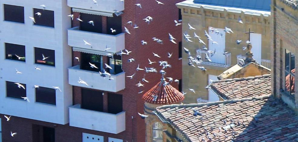 La superpoblación de palomas amenaza los tejados de la basílica de la Vega