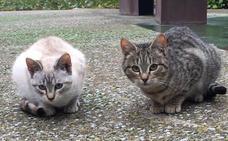 Santo Domingo cuida a los gatos callejeros