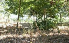 Berceo urge a la Consejería de Fomento a adecentar el parque Gonzalo de Berceo