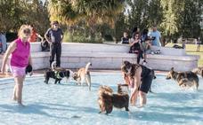 Un día de perros en las piscinas