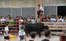 La suelta de toros ensogados atrajo ayer a numerosos aficionados