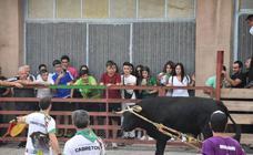 Suelta de toros ensogados en Cabretón