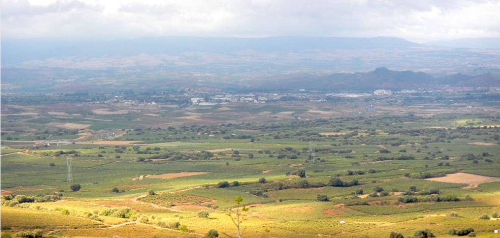 Dehesa de Navarrete, una isla de bosque entre un mar de viñedos