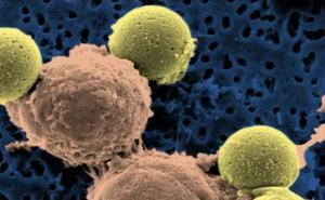 Un investigador riojano diseña fármacos antitumorales que se activan con luz