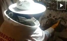 Retiran un gran nido de avispa de la pared de una habitación en Santo Domingo