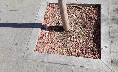 Los árboles del San Pedro también fuman