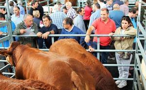 Toros y vacas de primera en Villoslada