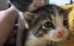 Aparece una camada de gatos entre contenedores en Villamediana