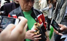 Los perros ya son mascotas en China