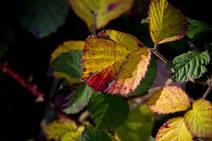 Los colores del otoño en la montaña riojana