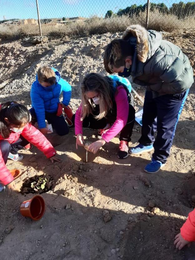 Trasplante de plantas de alumnos y profesores al huerto de aromas. / L.S.