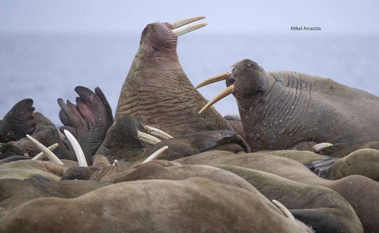 Las impresionantes imágenes de naturaleza extrema en la isla de Svalbard