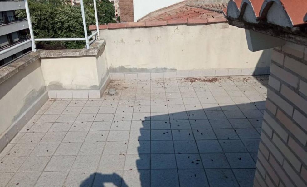 La Guindilla: cinco años con cucarachas en varios edificios de Pérez Galdós