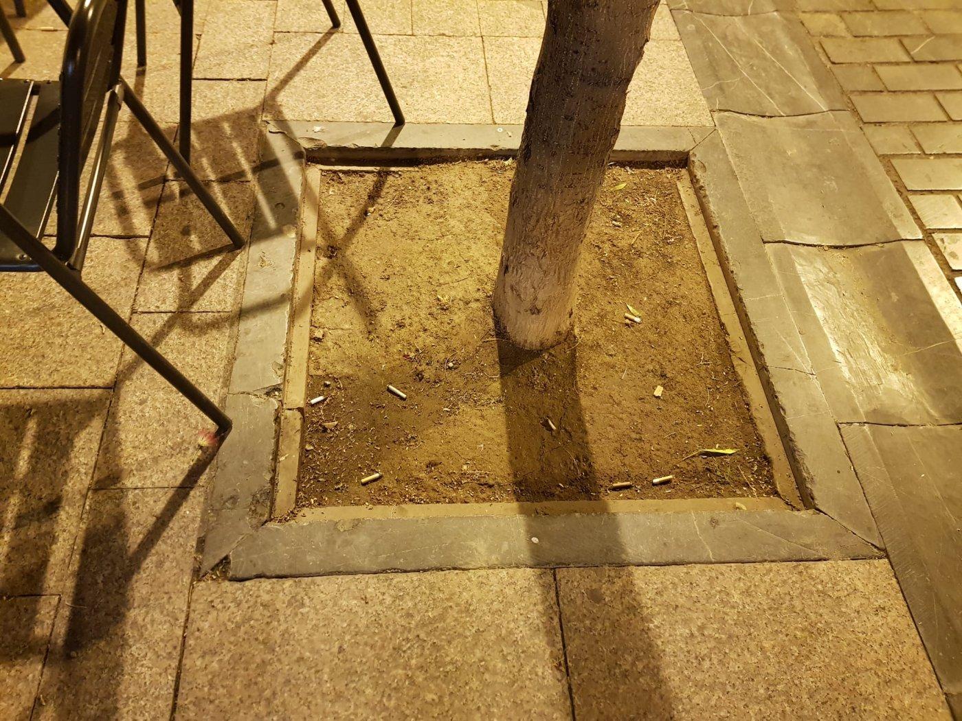 Los alcorques «son ceniceros» de las terrazas