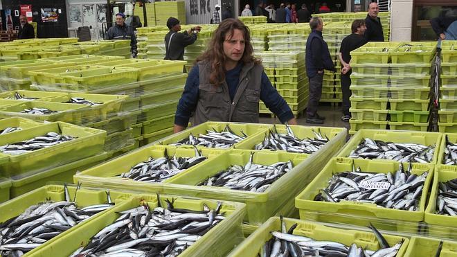El Gobierno vasco detecta una presencia importante de anisakis en las anchoas
