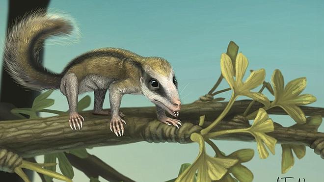 Descubren fósiles de dos mamíferos que vivieron hace 160 millones de años en China