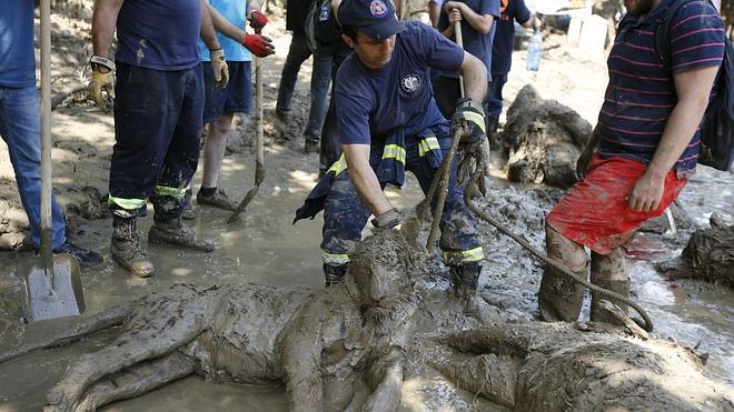 Un tigre que se escapó del zoo durante las inundaciones en Georgia mata a un hombre