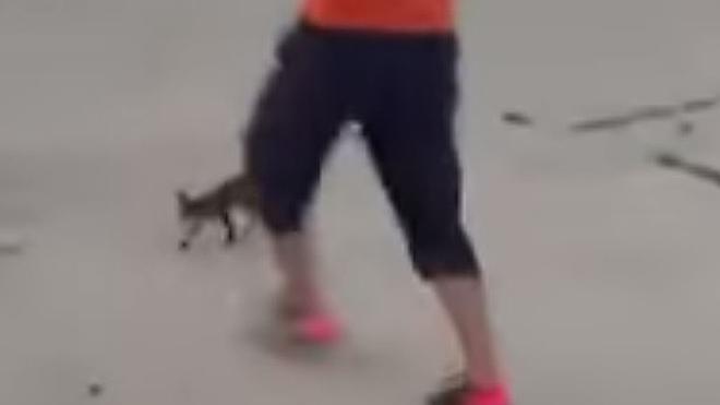 Identificados los tres menores que mataron a un gato a patadas y colgaron el vídeo en Internet