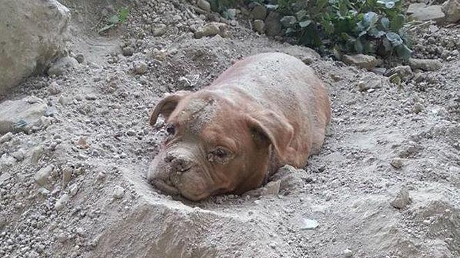 El caso de una perra enterrada viva escandaliza a Francia