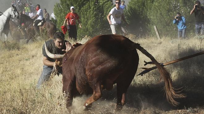 'Rompesuelas', el toro que divide partidos