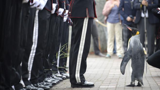 Un pingüino al servicio de Harald V