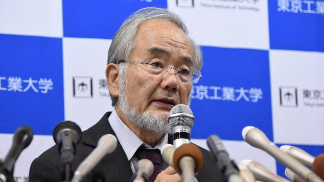 El japonés Yoshinori Ohsumi gana el Nobel de Medicina por describir el reciclaje celular